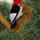 Redheaded Woodpecker by Walter Colvin