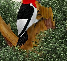 Redheaded Woodpecker by Walter Colvin