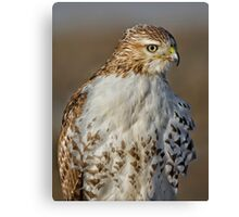 Red tailed Hawk Profile Canvas Print