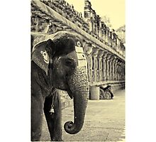 The holy elephant Photographic Print