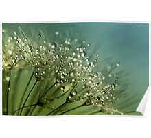 Dew Speckled Fountains  Poster