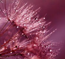 Dew Drop Blush by ImageMonkey