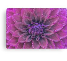 Purple dahlia with dew Canvas Print
