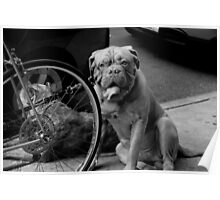 Dogs tied to a bicycle Poster