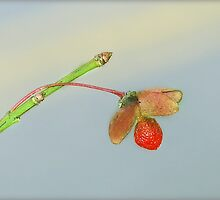 Tiny by saripin