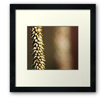 Seeds Apart Framed Print