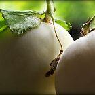 Cantaloupes by saripin