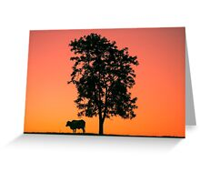 Sunset silhouette a cow Greeting Card