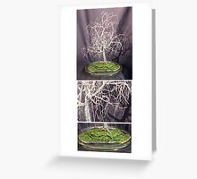 POPLAR IN ROUND GLASS  - Wire Tree Sculpture, by Sal Villano  Greeting Card