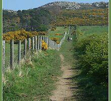 Bray Head Walk by dOlier