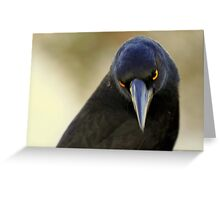 north head manly - yellow eyes Greeting Card