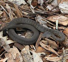 Snake! by Bami