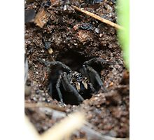 Wolf Spider - welcome to my home Photographic Print