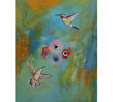 Hummingbirds Photographic Print
