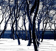 Trees in Snow by Tom Prendergast