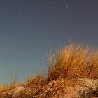 Night, Sand-Dune Grass by sedge808