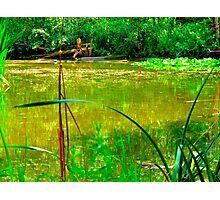 An Irish Spring pond Photographic Print