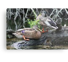 The Grey Pair Metal Print