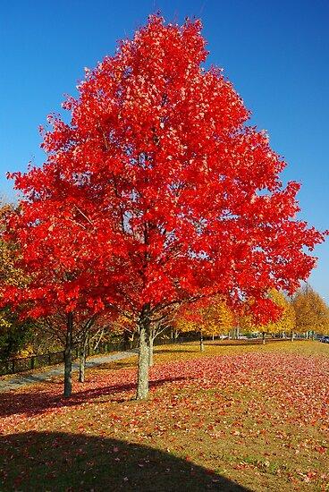 Autumn in Connecticut by Alberto  DeJesus
