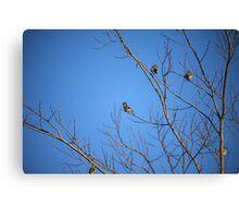 Yellow Birdies  Canvas Print