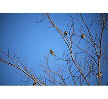 Yellow Birdies  Photographic Print