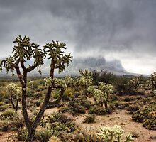 A Foggy Arizona Morning  by Saija  Lehtonen