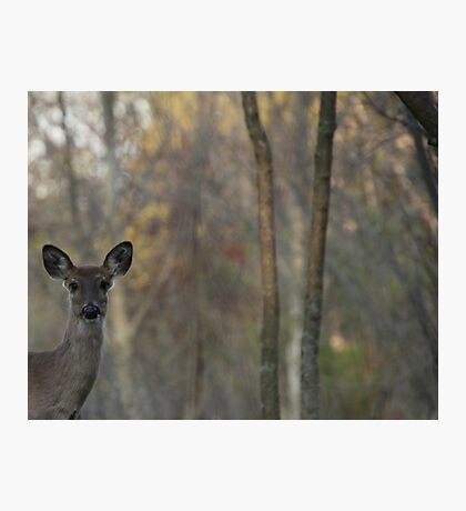Deer is proud of his forest! Photographic Print