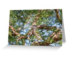 Greater Roadrunner Perched in Tree Greeting Card