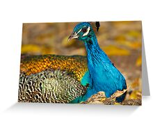 Peacock in Autumn Leaves Greeting Card