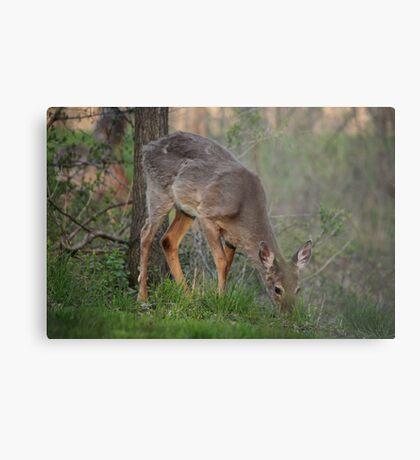 Wild Deer Eats Dinner Metal Print