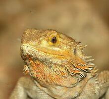 Bearded Dragon by neil harrison