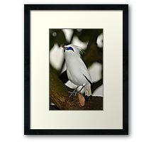 Bali Starling Framed Print
