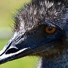 Ernest the Emu by Deborah Clearwater