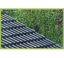 Roof and trees Photographic Print