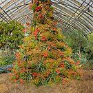 The Mediterranean Christmas Tree by Marilyn Cornwell