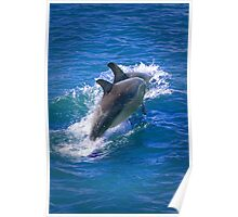 Dolphin Journey Poster