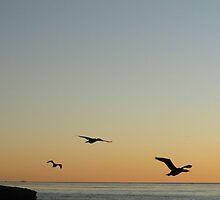 Night Flight by kashmirecho