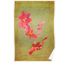 Verdant Orchid Poster
