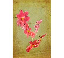Verdant Orchid Photographic Print