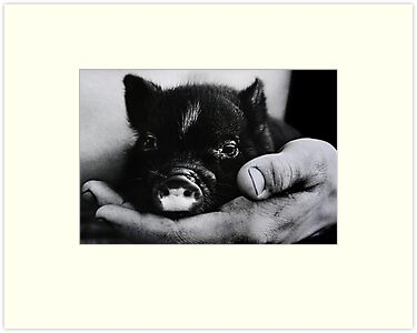 """Piglet in Palm"" by Laurie Minor"
