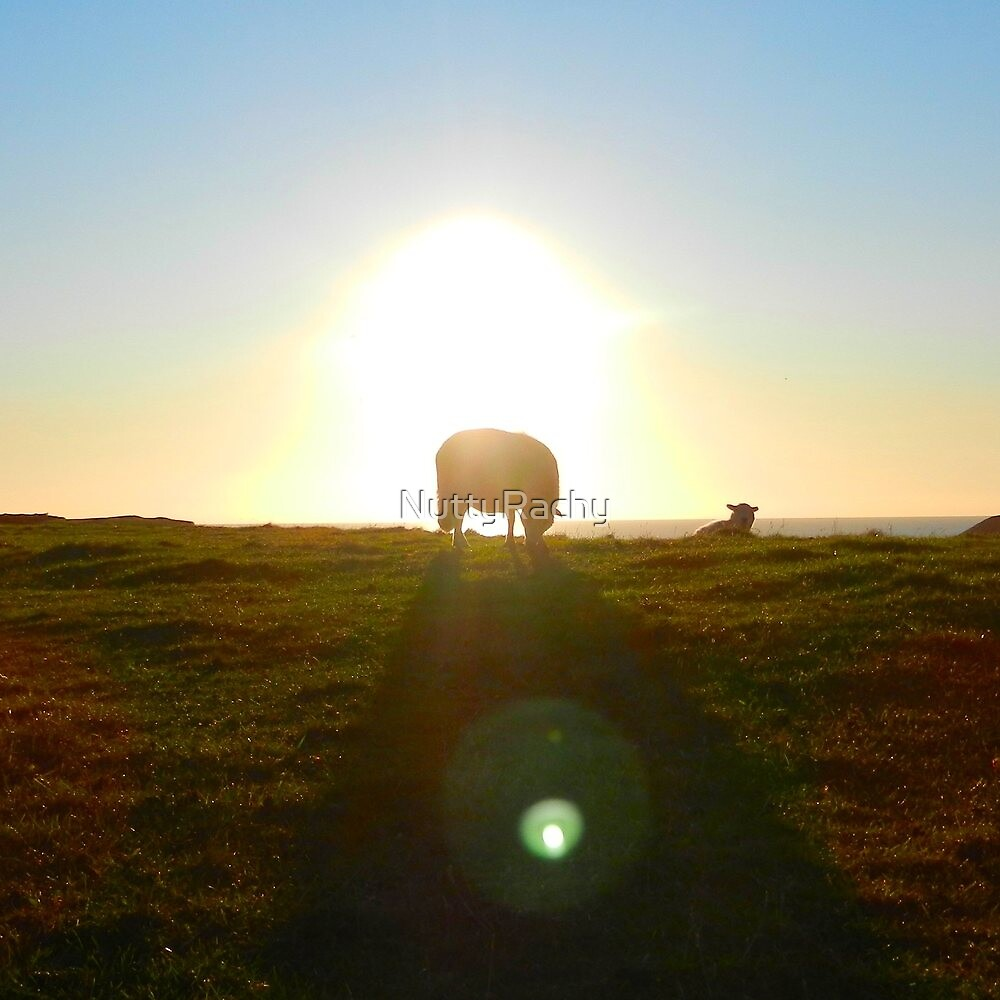 Sheep Silhouette  by NuttyRachy