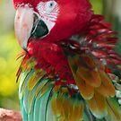 Beautiful Macaw by Sheryl Unwin