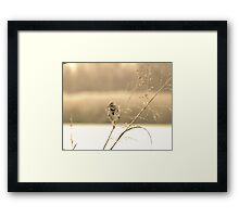 Sparrow in the golden sun set Framed Print