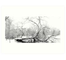 Dying Tree lies in the Freezing Canal Art Print