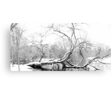 Dying Tree lies in the Freezing Canal Canvas Print