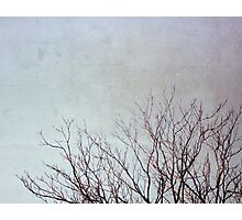 Dancing Branches Photographic Print