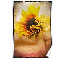 Grungy textured sunflower Poster