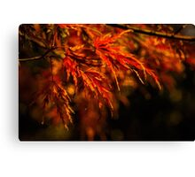 Impressions of autumn Canvas Print