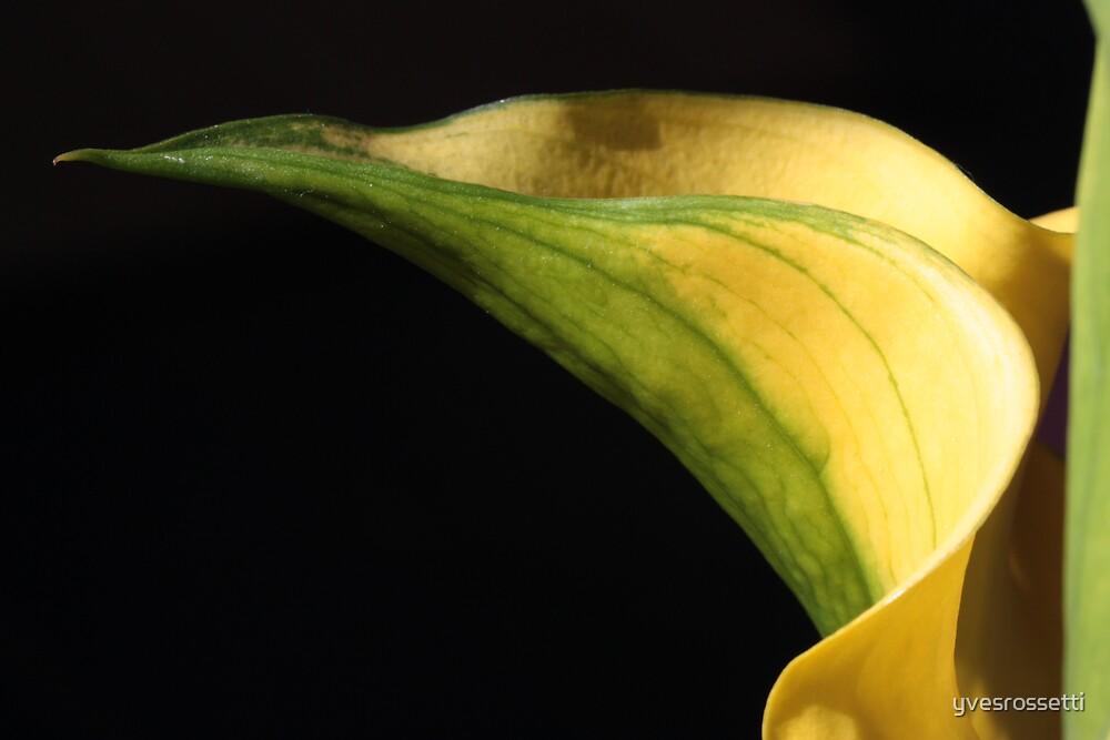offering nectar by yvesrossetti
