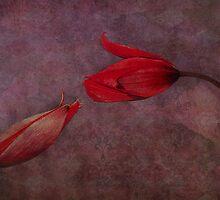 la langue des fleurs by lucyliu